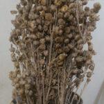 dried davana flowers in vase